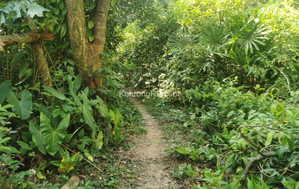 photo of land for sale on Koh Rong, trees, path, land, koh rong