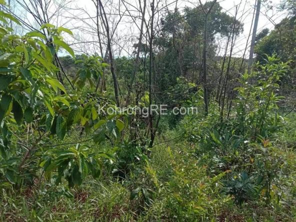 Land for sale in Koh Rong near Palm Beach(1)