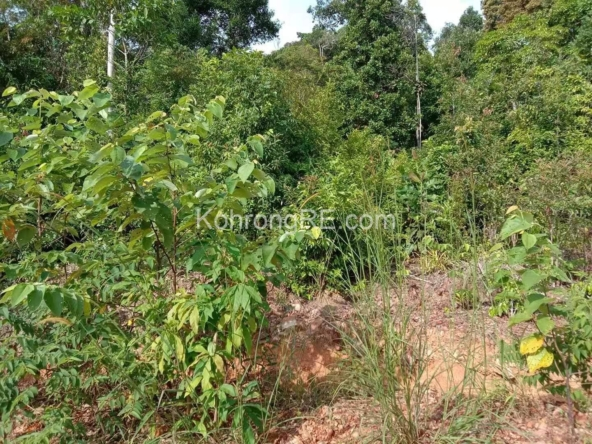 Land for sale in Koh Rong near Palm Beach